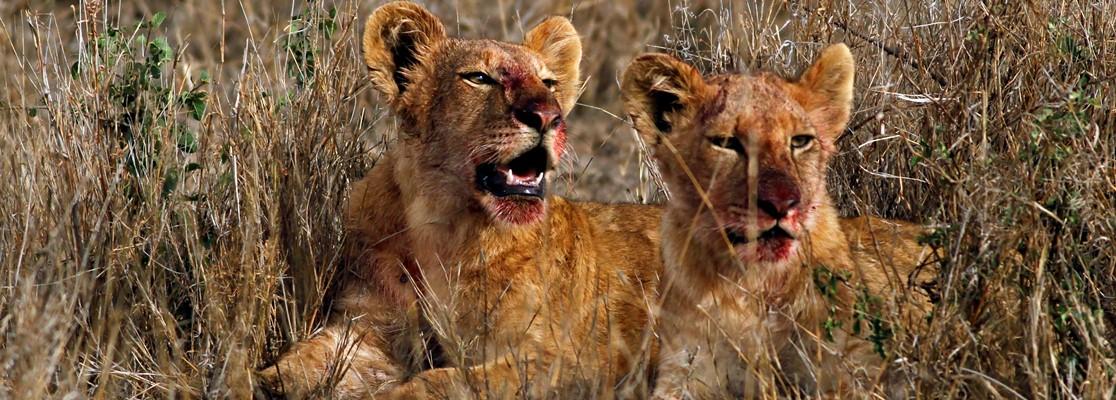7 Days Tanzania Safaris