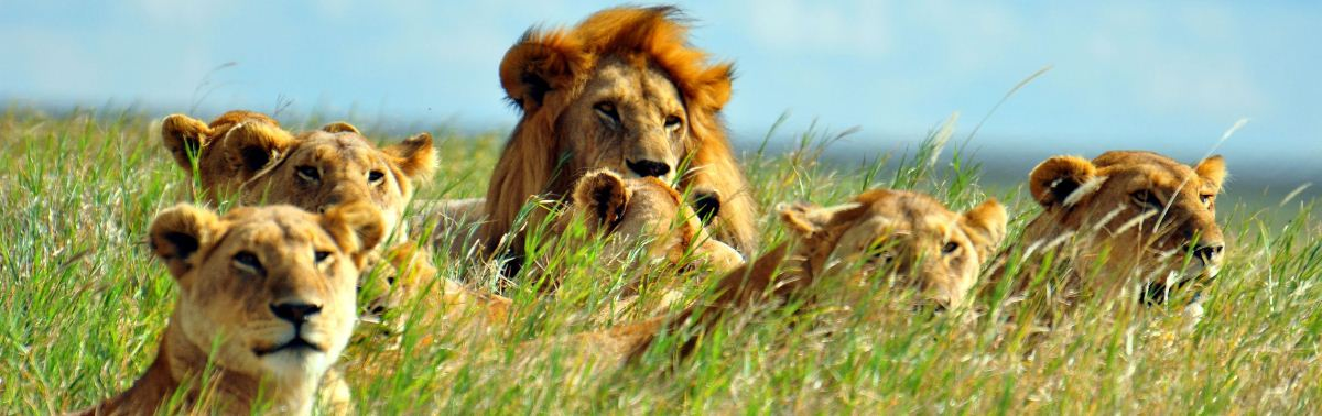 5 Days Holidays Safari Tanzania