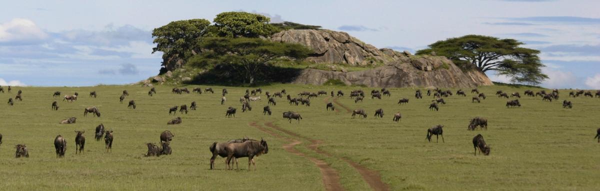 6 Days Tanzania Migration safari