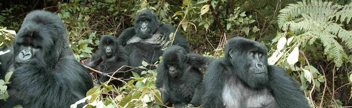 6 Days Gorilla Rwanda