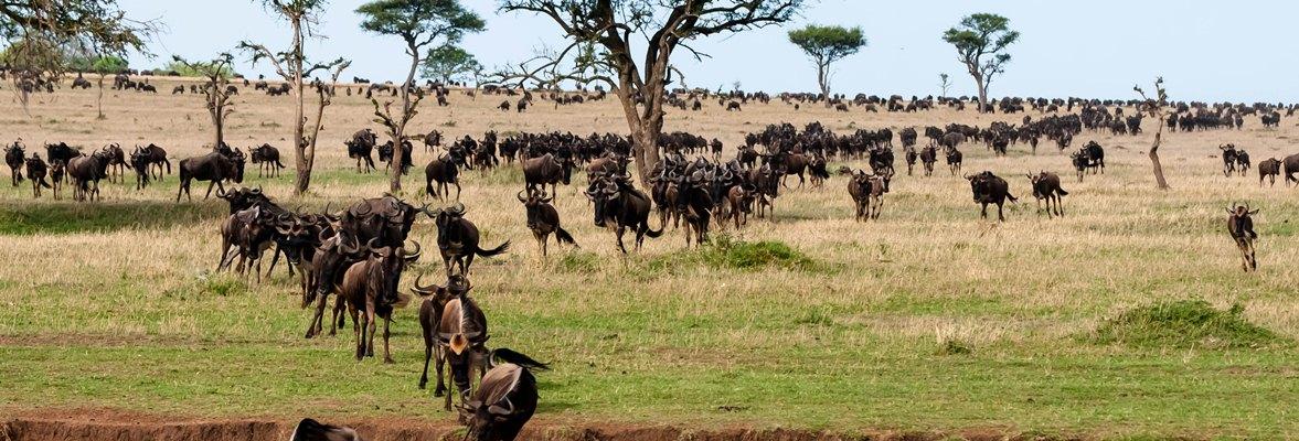 4 Days Serengeti Migration