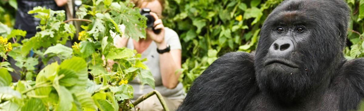 Gorilla Safari Rwanda