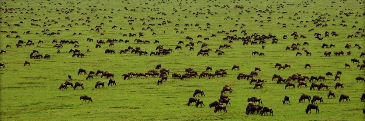 5 Days Serengeti Wildebeest