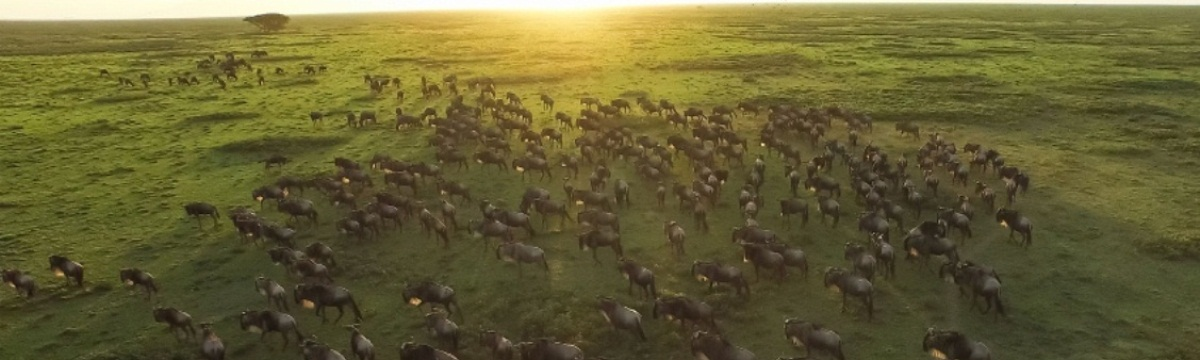 8 Days Safari Serengeti