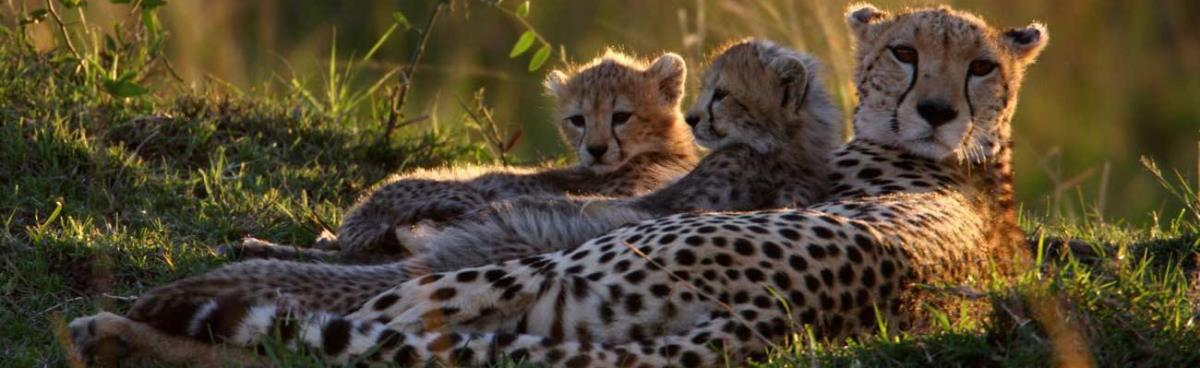 2 Days Safari