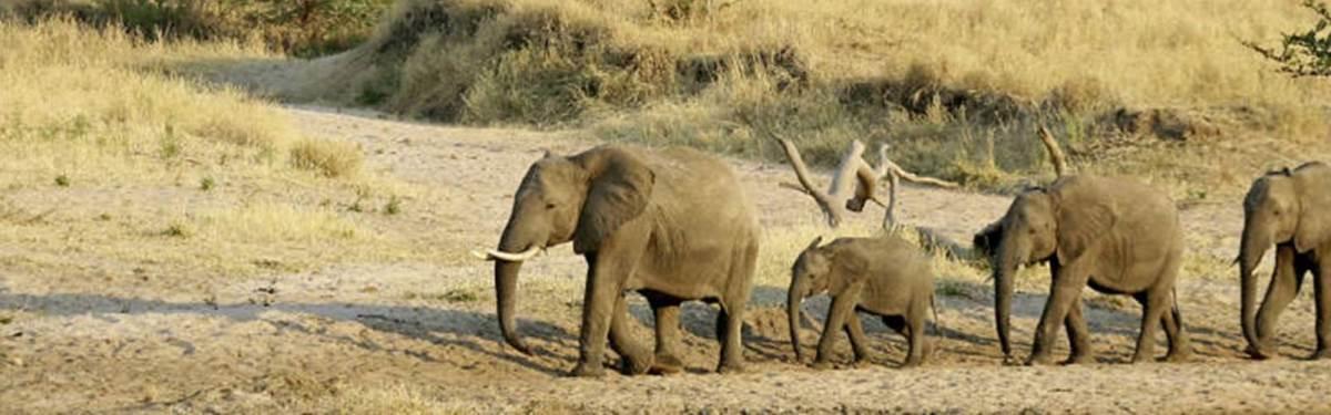 Tanzania Day Safari