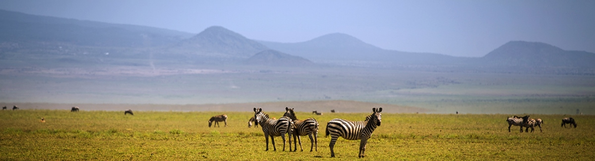 Tanzania Safari 10 Days