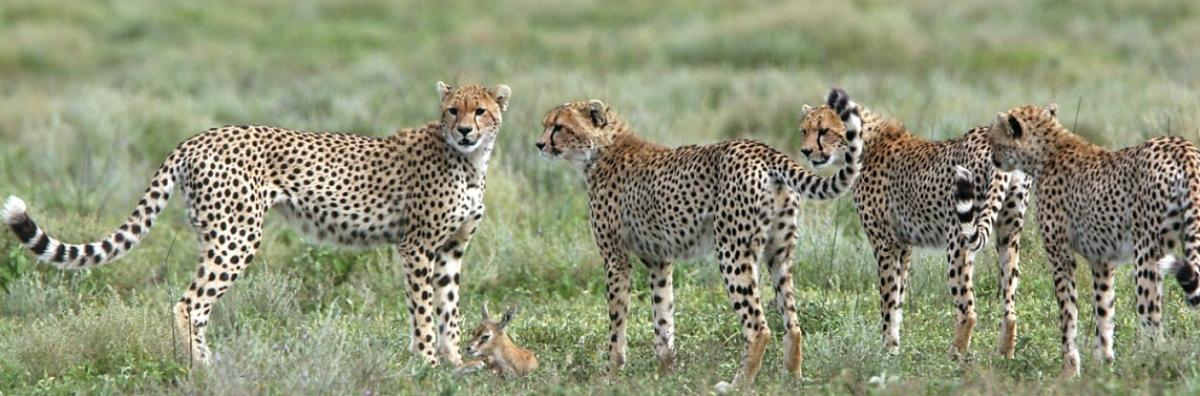 Tanzania Safari 11 Days