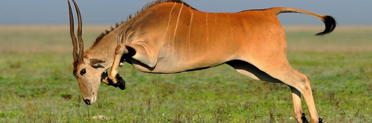 Tanzania Safari 4 Days