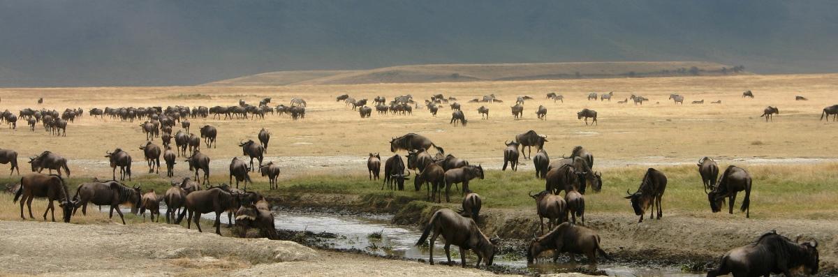 3 Days Serengeti Wildebeest