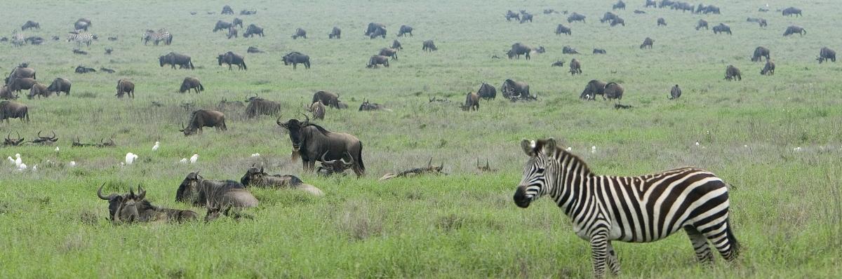 4 Days Serengeti Wildebeest
