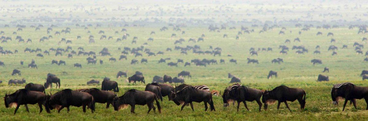 Serengeti Safari 5 Days