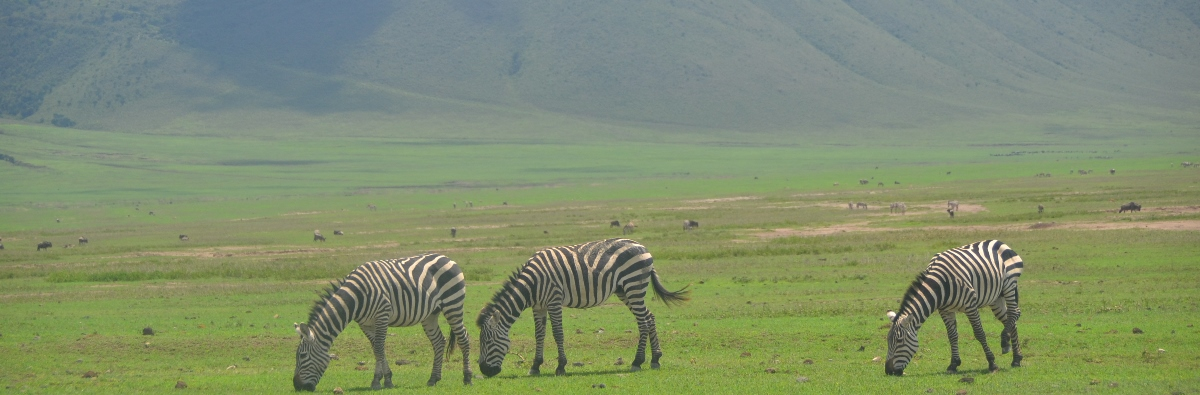 Ngorongoro Crater Tour Day Trip