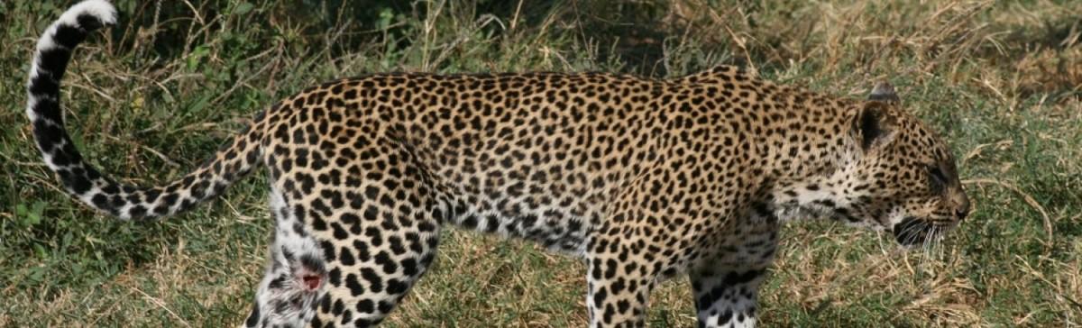 Tanzania Day Trip Safari