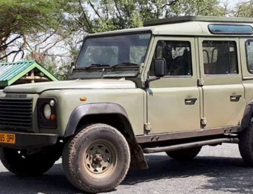 Turn your dreams into realities through best Tanzania safari packages for an adventurous experience