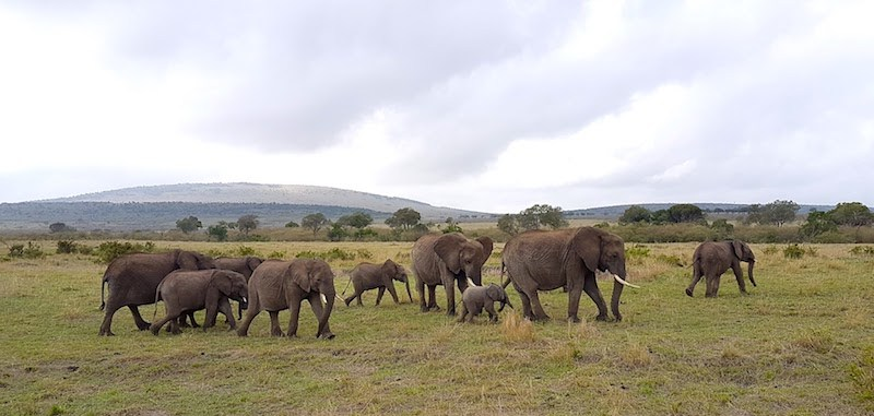 Affordable 4 Day Masai Mara Safari