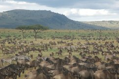 serengeti-migration-safaris