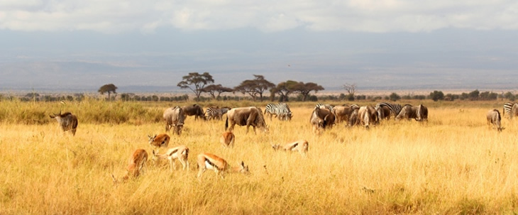 Tsavo East, Tsavo West and Amboseli